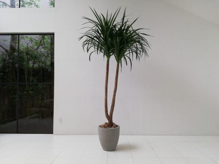 室内用グリーンが届きました(NAKANO)の画像